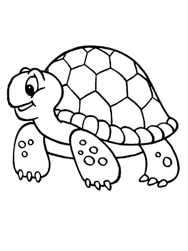 Coloring sheet turtle Download The king, the Queen.  Print ,the king and Queen,