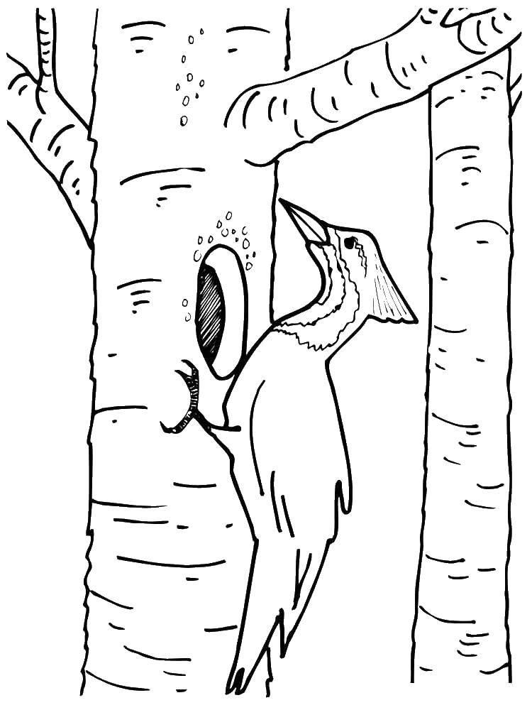 блюдо картинки раскраски птиц дятел есть, йеллоустонский национальный