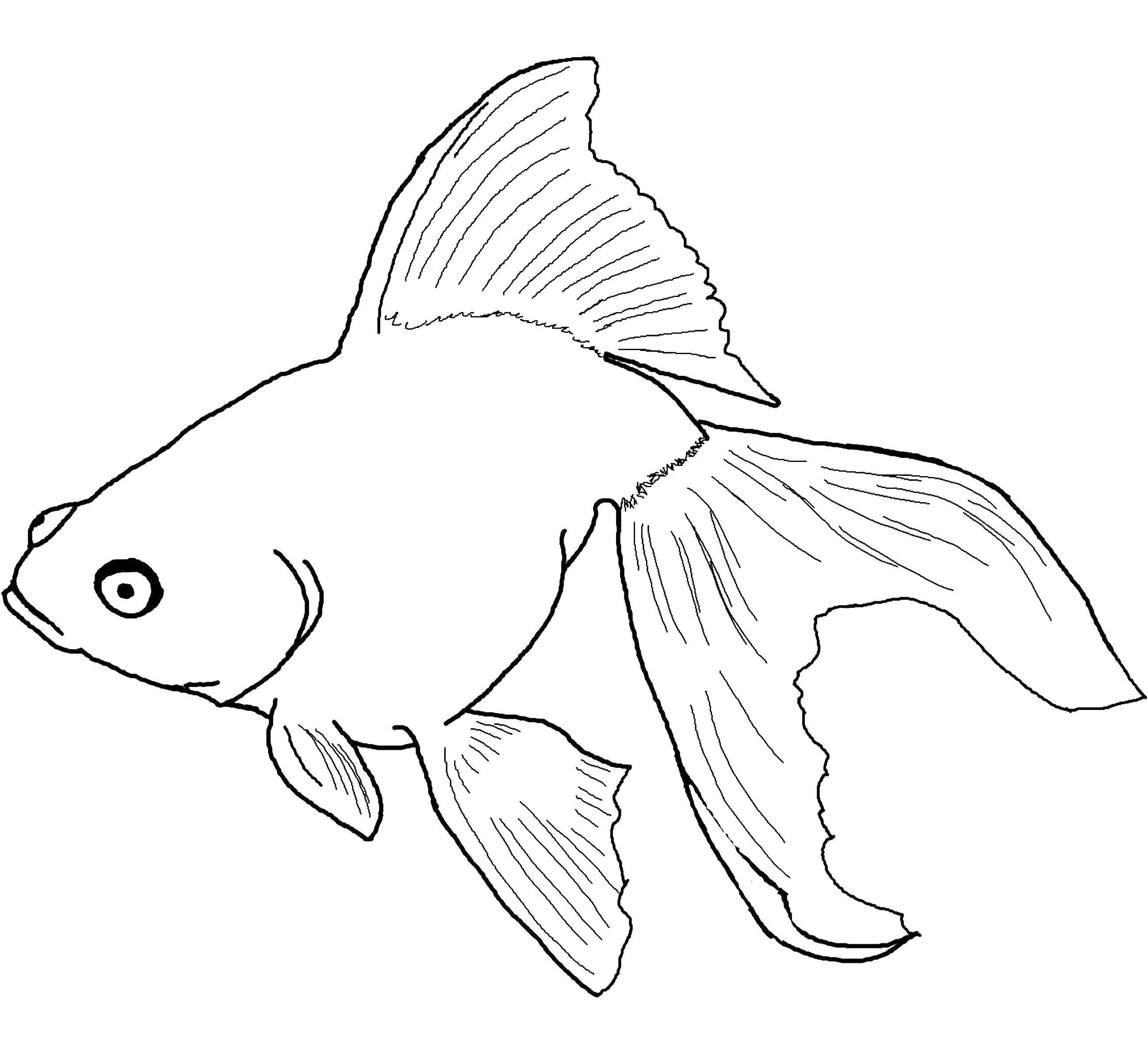 Coloring sheet fish Download leaves.  Print ,The contours of the leaves,