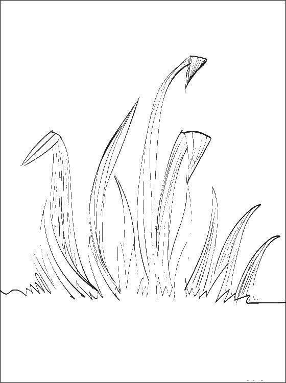 Coloring sheet The contours of grass to cut Download Skull, patterns.  Print ,Skull,