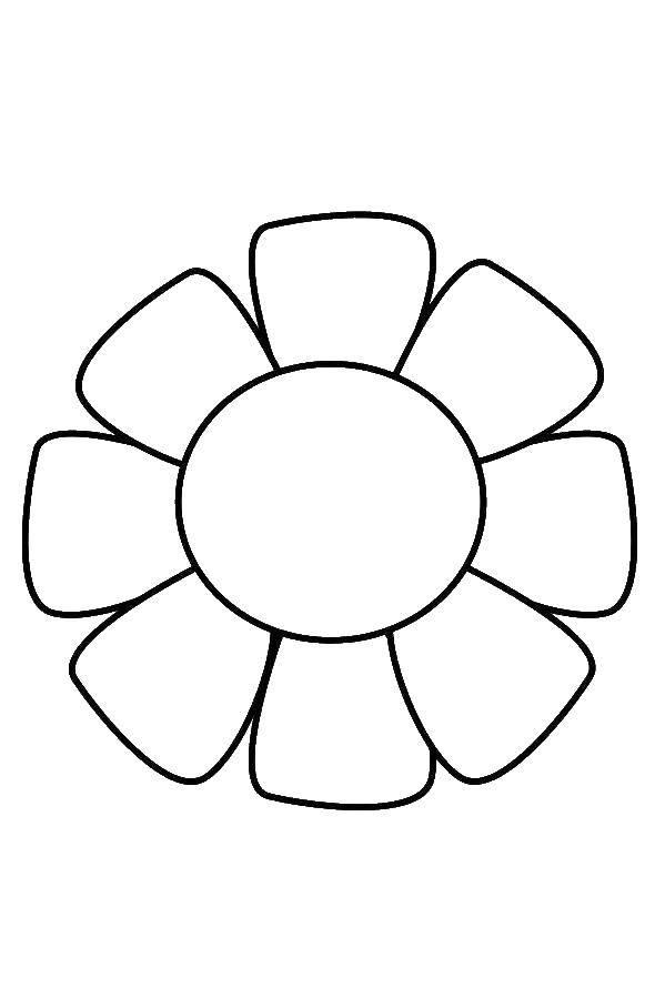 Картинка ромашка цветок раскраска для детей