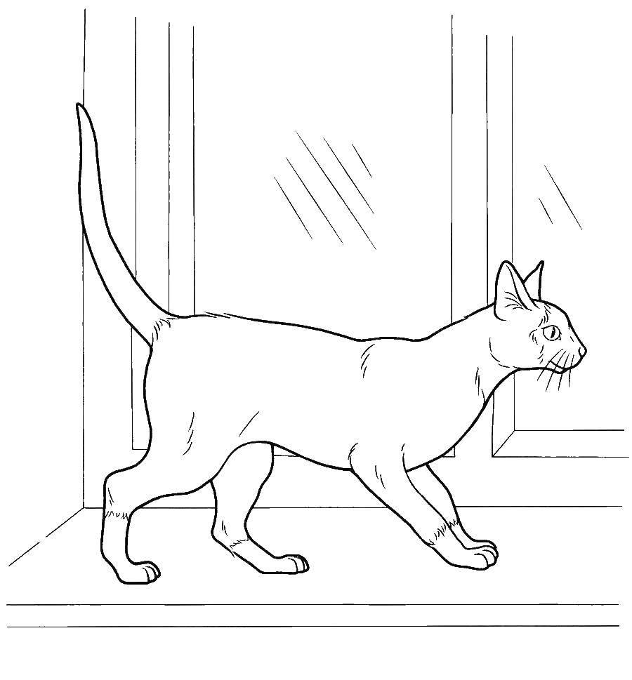 Раскраски Раскраска Узорчатая кошка Коты и котята, скачать ...