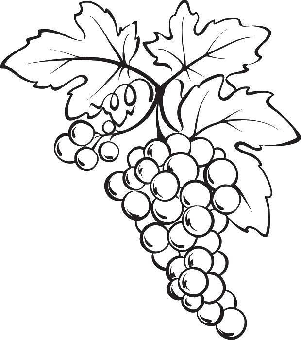 Раскраска виноград Скачать ,Ягоды,.  Распечатать