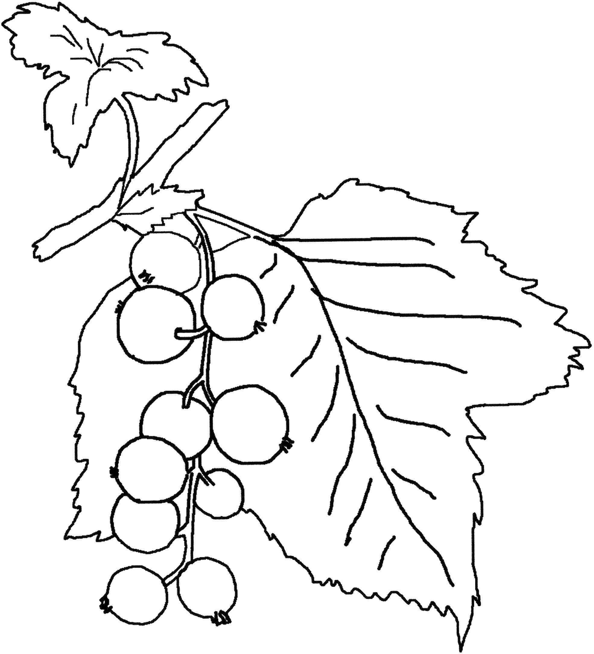 Coloring sheet fruit Download Hidden object.  Print ,Find items,