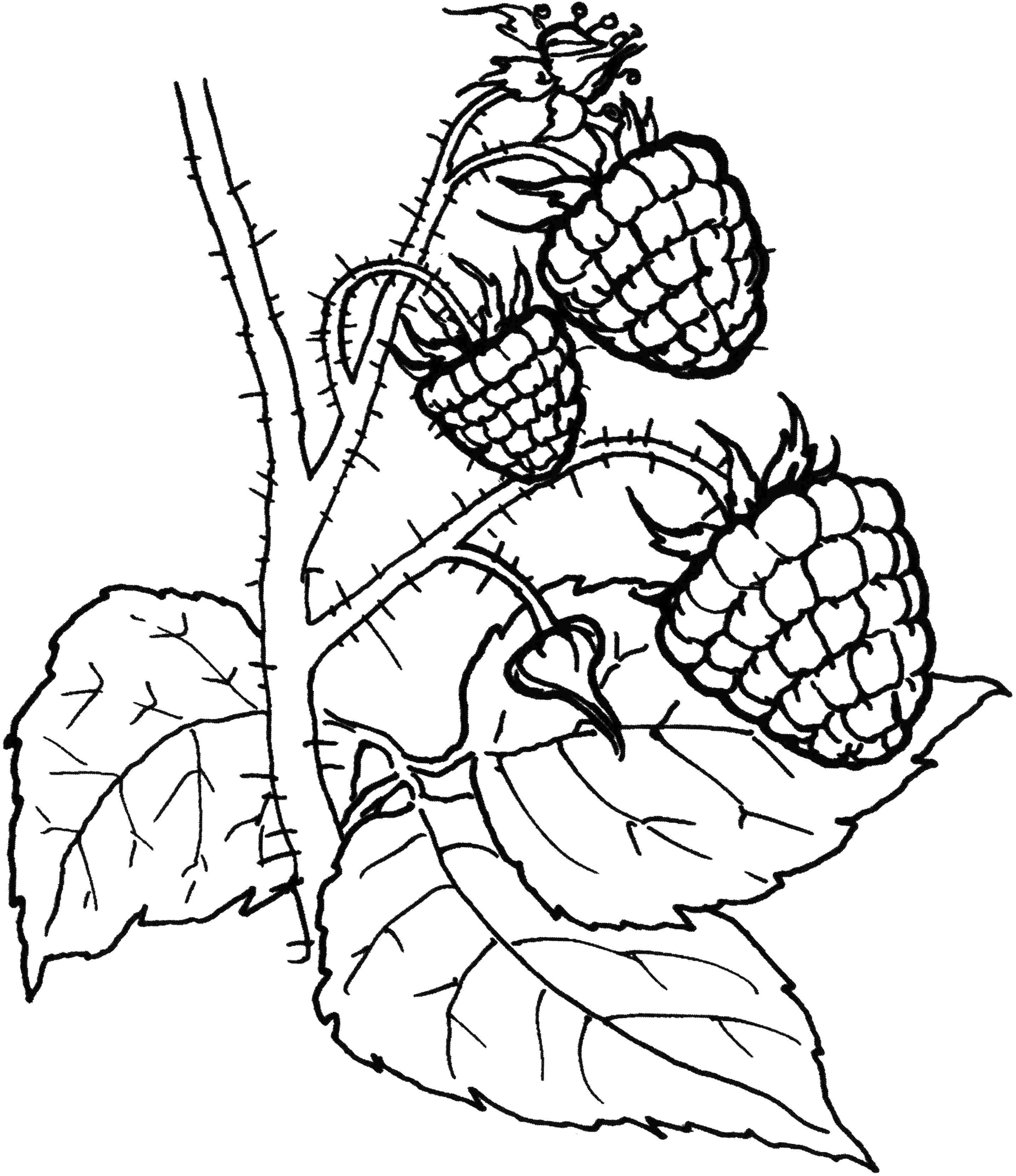 Раскраски фруктов Раскраска Корзина фруктов Фрукты