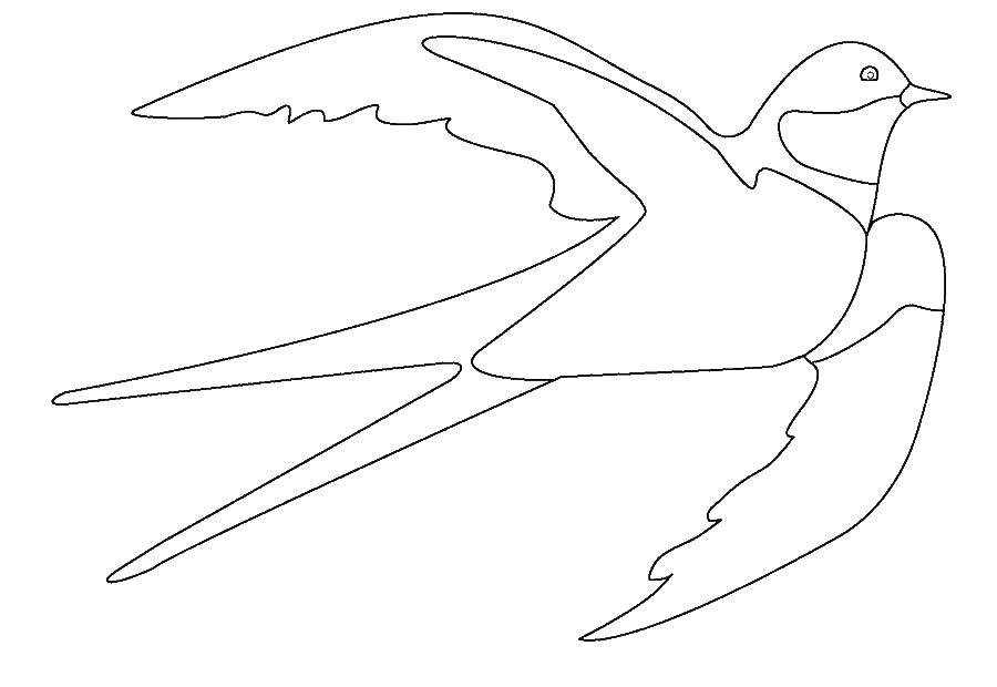 Coloring Swallow Download swallows.  Print ,The contours for cutting out the birds,