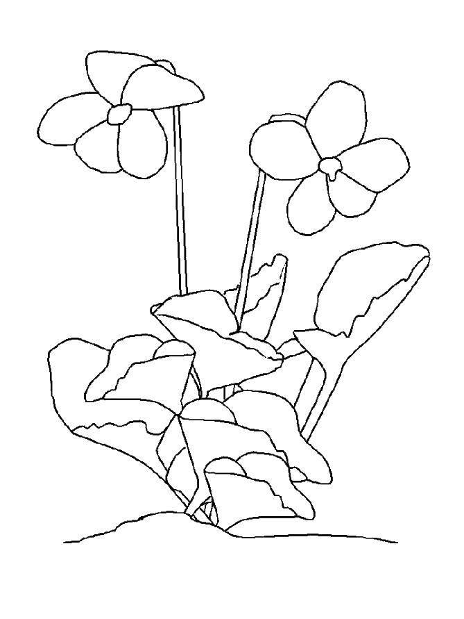 Раскраски корзина, Раскраска Корзина с цветами цветы.