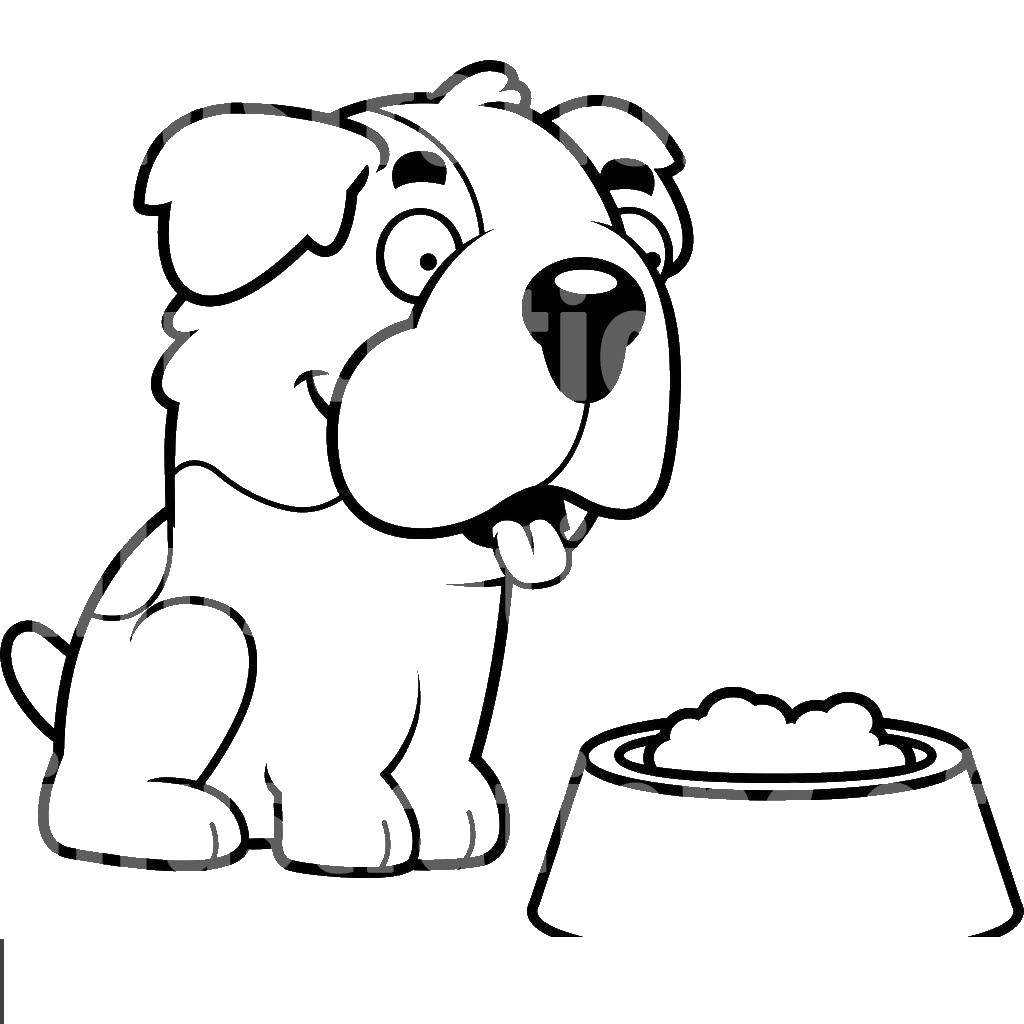 Coloring sheet dog Download .  Print