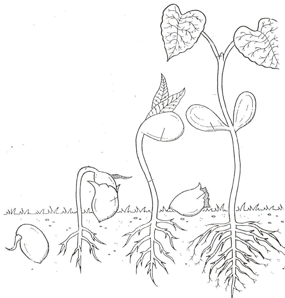 рисунок о росте