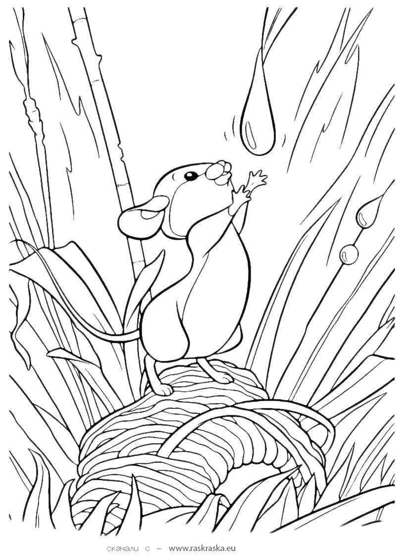 Coloring Cartoon Bambi. Category Bambi. Tags:  Bambi, cartoons, mouse.
