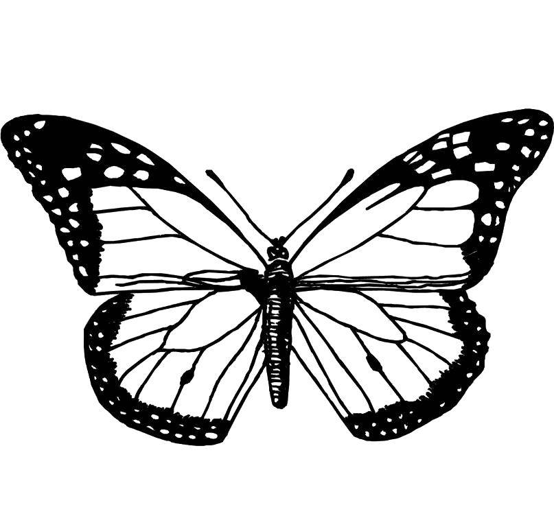 Coloring sheet butterfly Download Outline ,.  Print