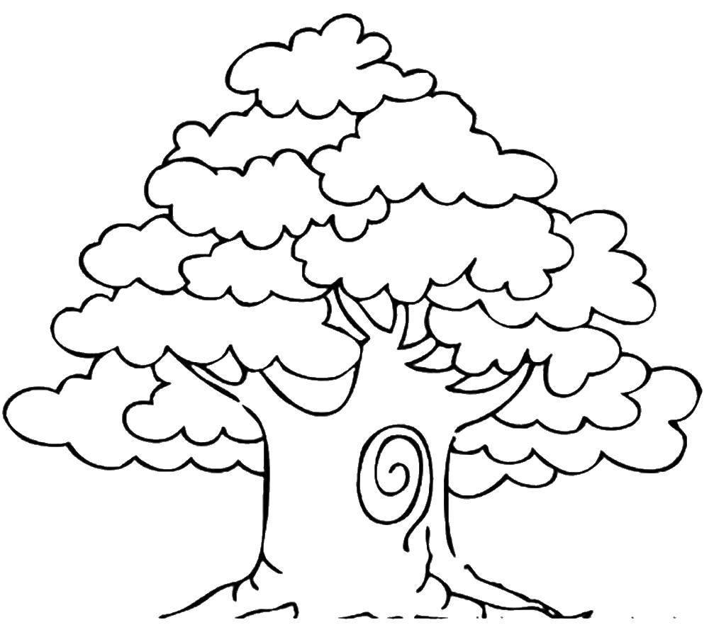 Раскраска деревьев для детей
