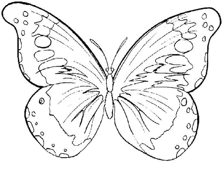 Бабочки картинки для детей черно белые