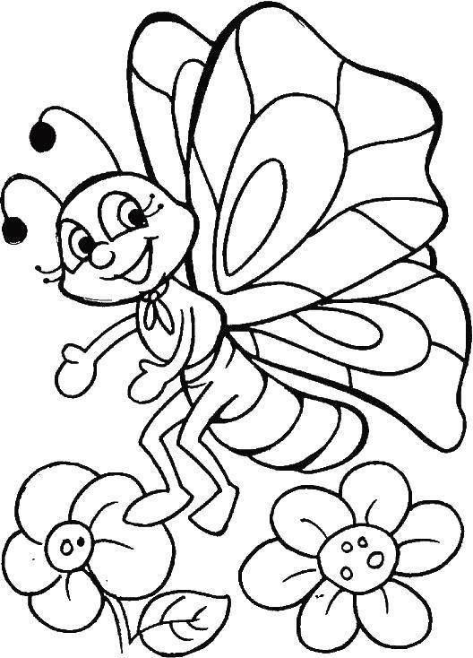 Coloring sheet butterfly Download .  Print