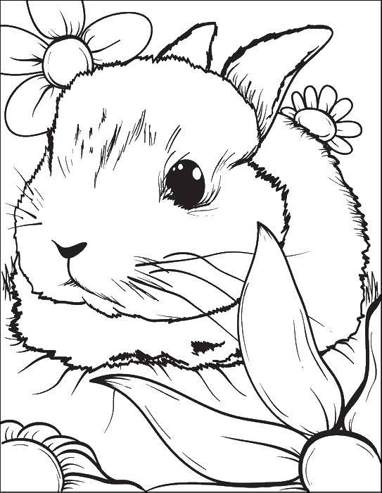Coloring sheet rabbit Download .  Print