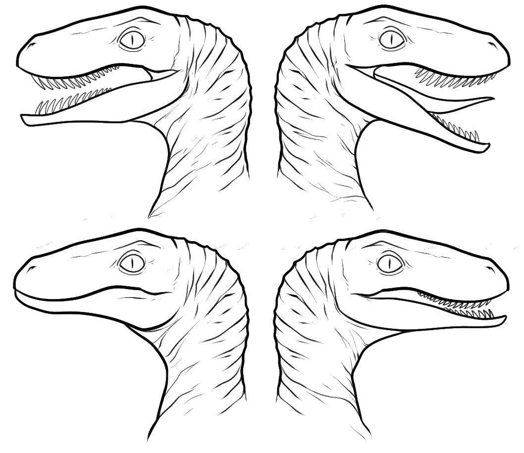 Раскраски динозавр, Раскраска Самый большой динозавр динозавр.