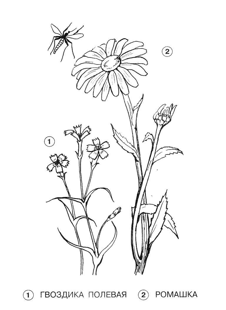 Coloring sheet flowers Download .  Print