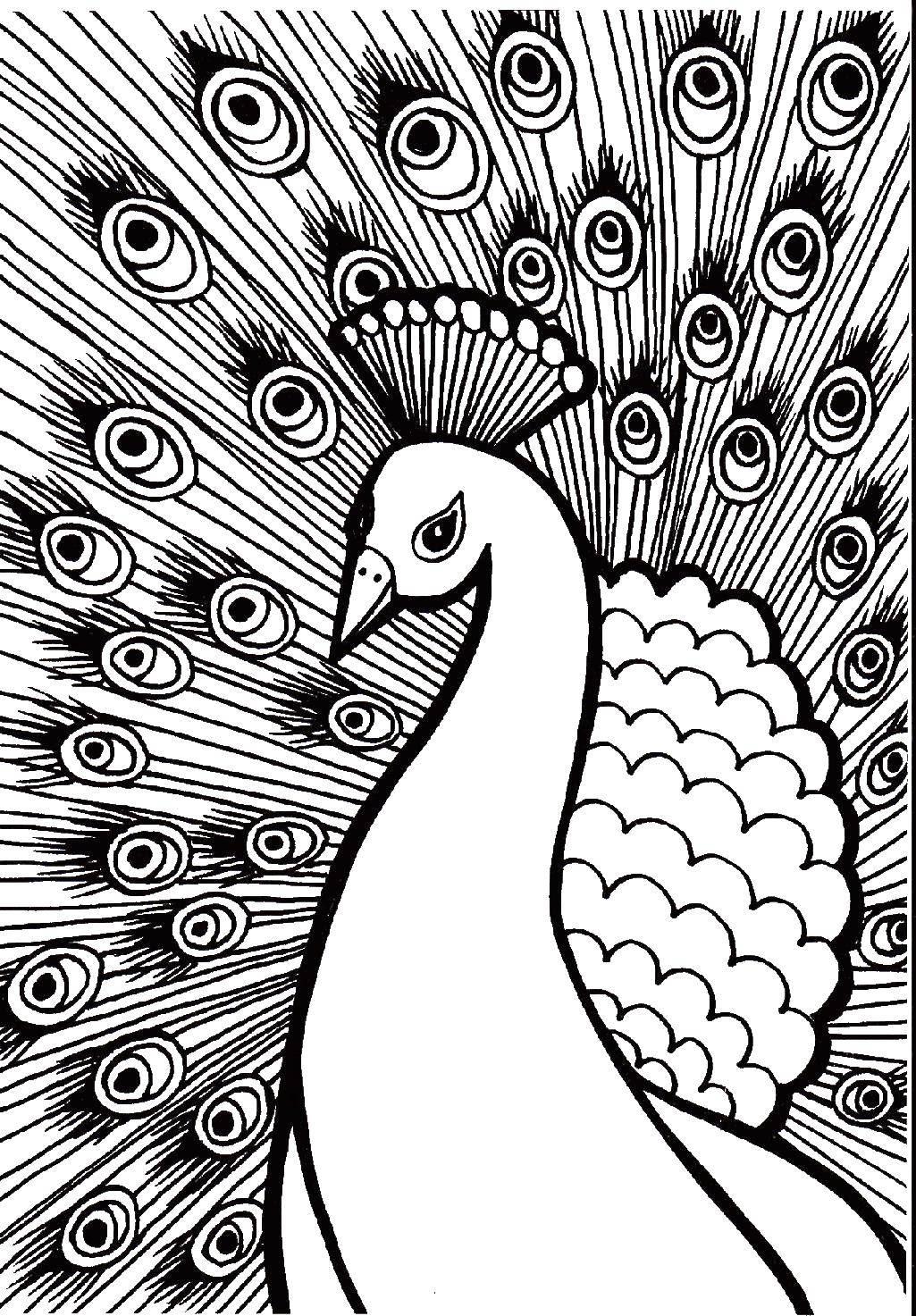 Раскраски единорог, Раскраска Единорог с крыльями мой ...