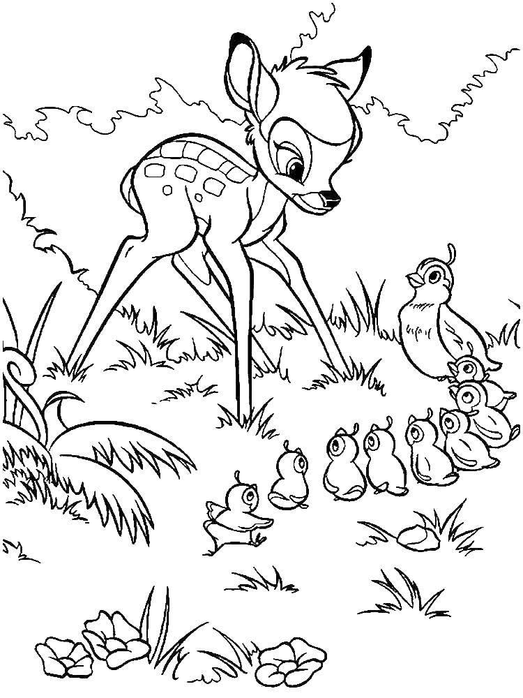 Раскраски утка, Раскраска Утка дейзи Диснеевские мультфильмы.