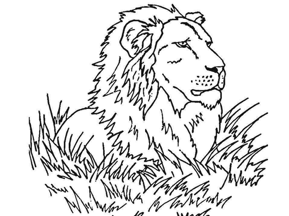 Раскраски картинки лев