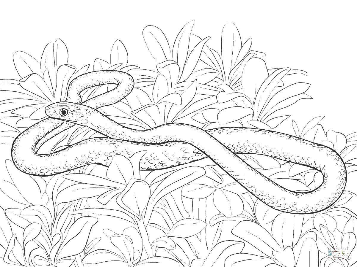 как распечатать картинки змей очень