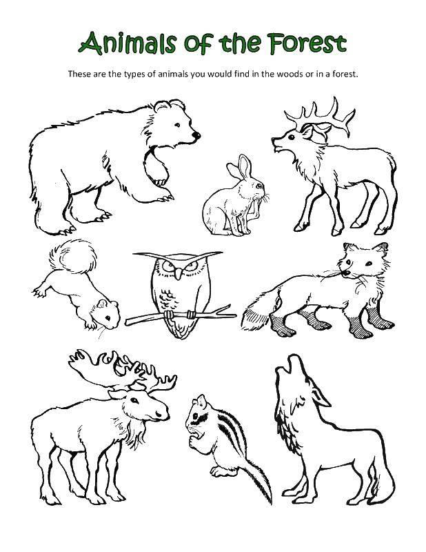 Coloring sheet Animals Download animals, APE, monkey, bananas.  Print ,Animals,