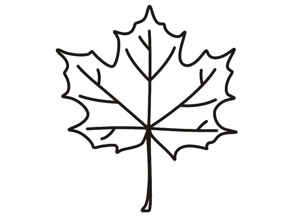 Раскраска Осенний листопад Скачать ,кленовый лист,.  Распечатать