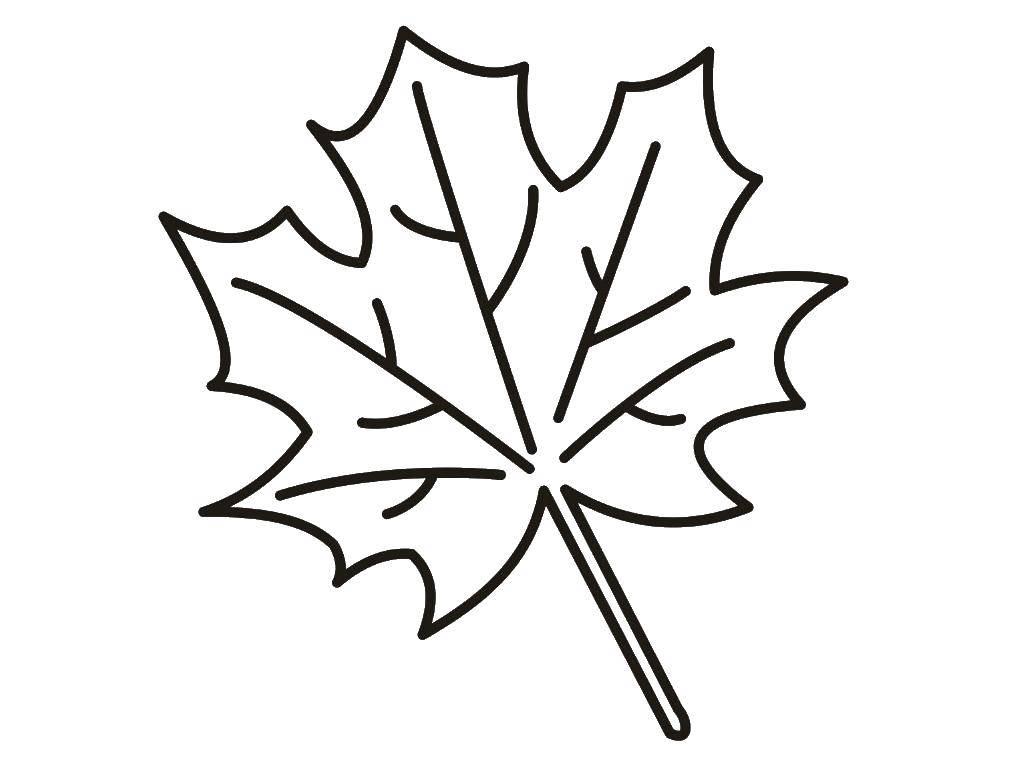 Картинки раскраска листочки осенние