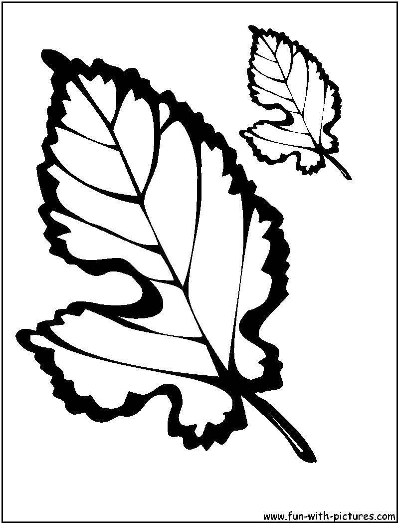Лист тополя раскраска