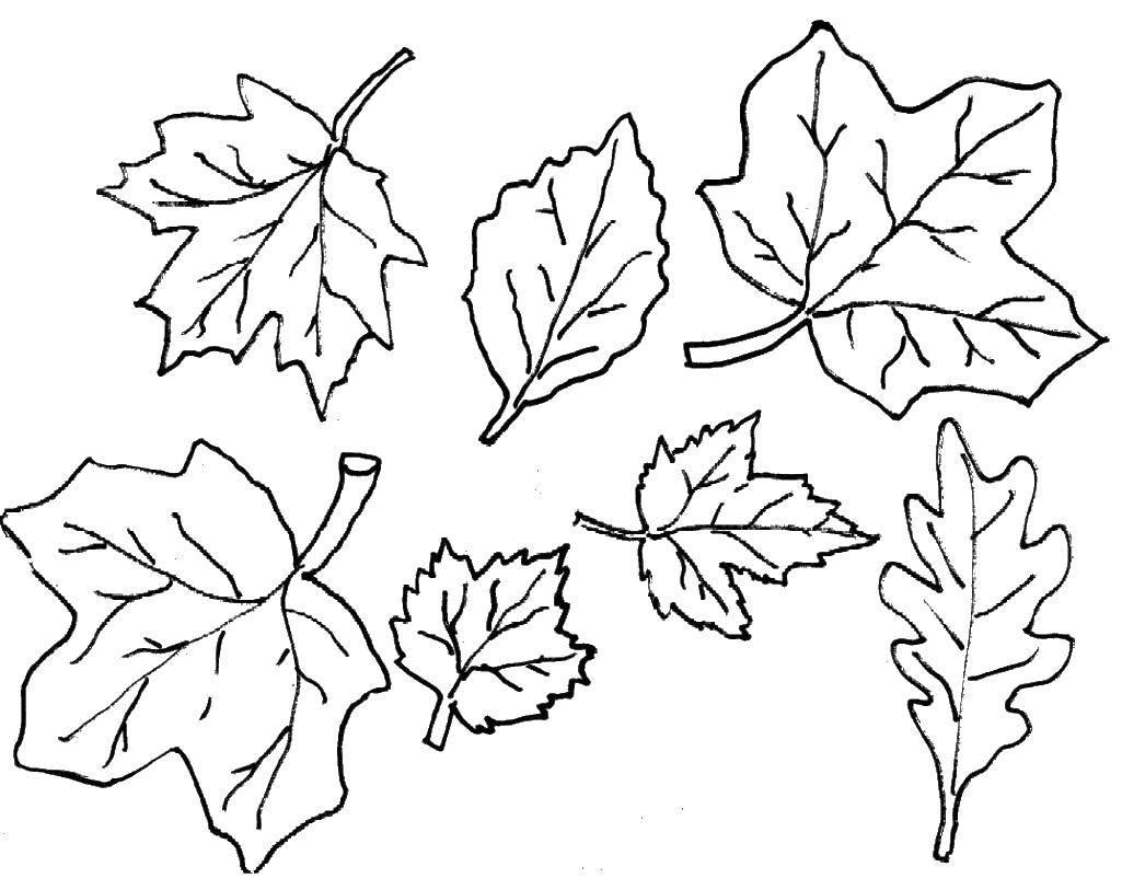 пока картинка раскраска осенние листья рассказали секретах