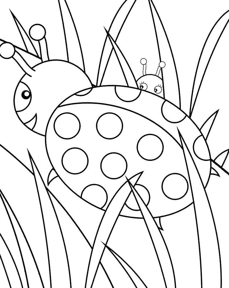 Coloring sheet ladybug Download .  Print