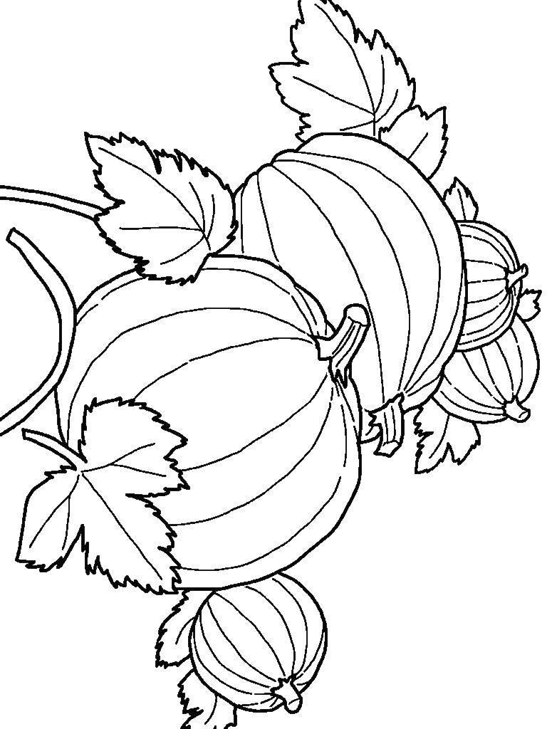 шаблоны для раскрашивания на тему осень
