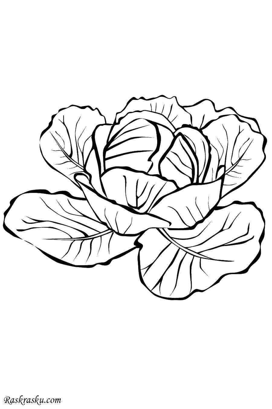 Раскраски картофель, Раскраска Картофель Овощи.