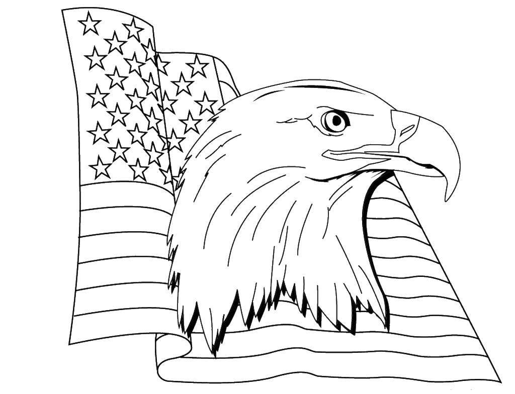 Распечатать картинки орел