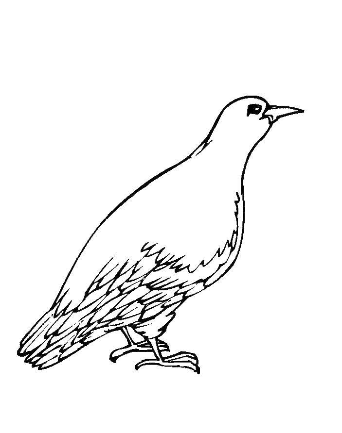 Coloring sheet dove of peace Download Charlotte, a strawberry, cartoons.  Print ,Charlotte zemlyanichka cartoons,