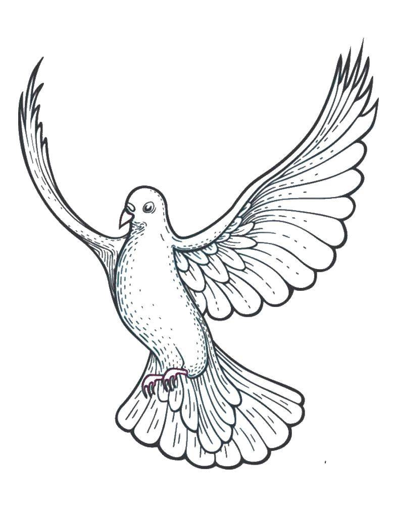 Coloring sheet dove of peace Download month, stars, night.  Print ,coloring,