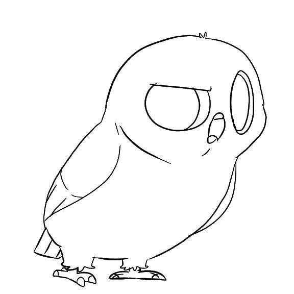 Coloring sheet night birds Download .  Print