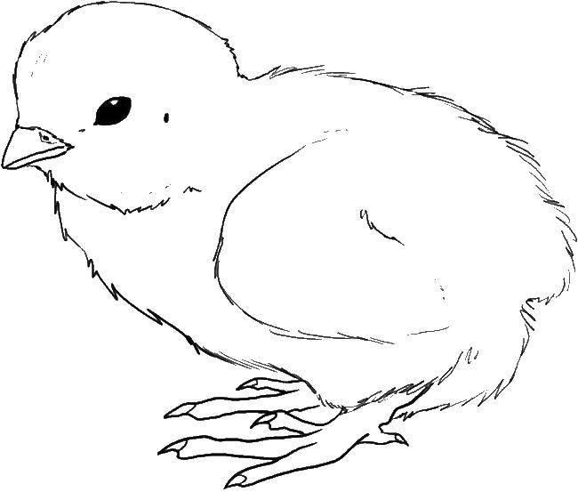 было картинки цыплят для рисования уйдешь