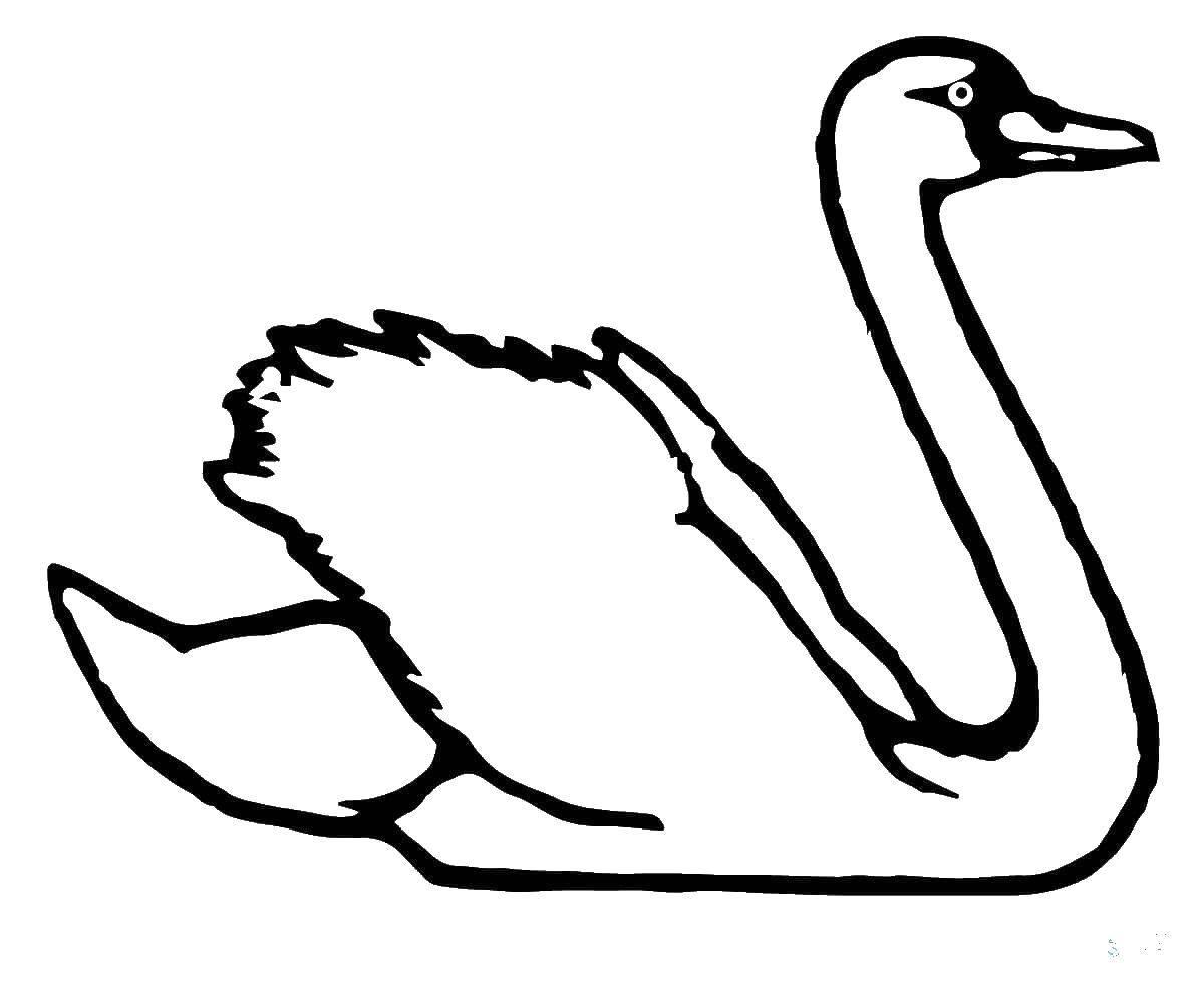 Лебеди картинка раскраска