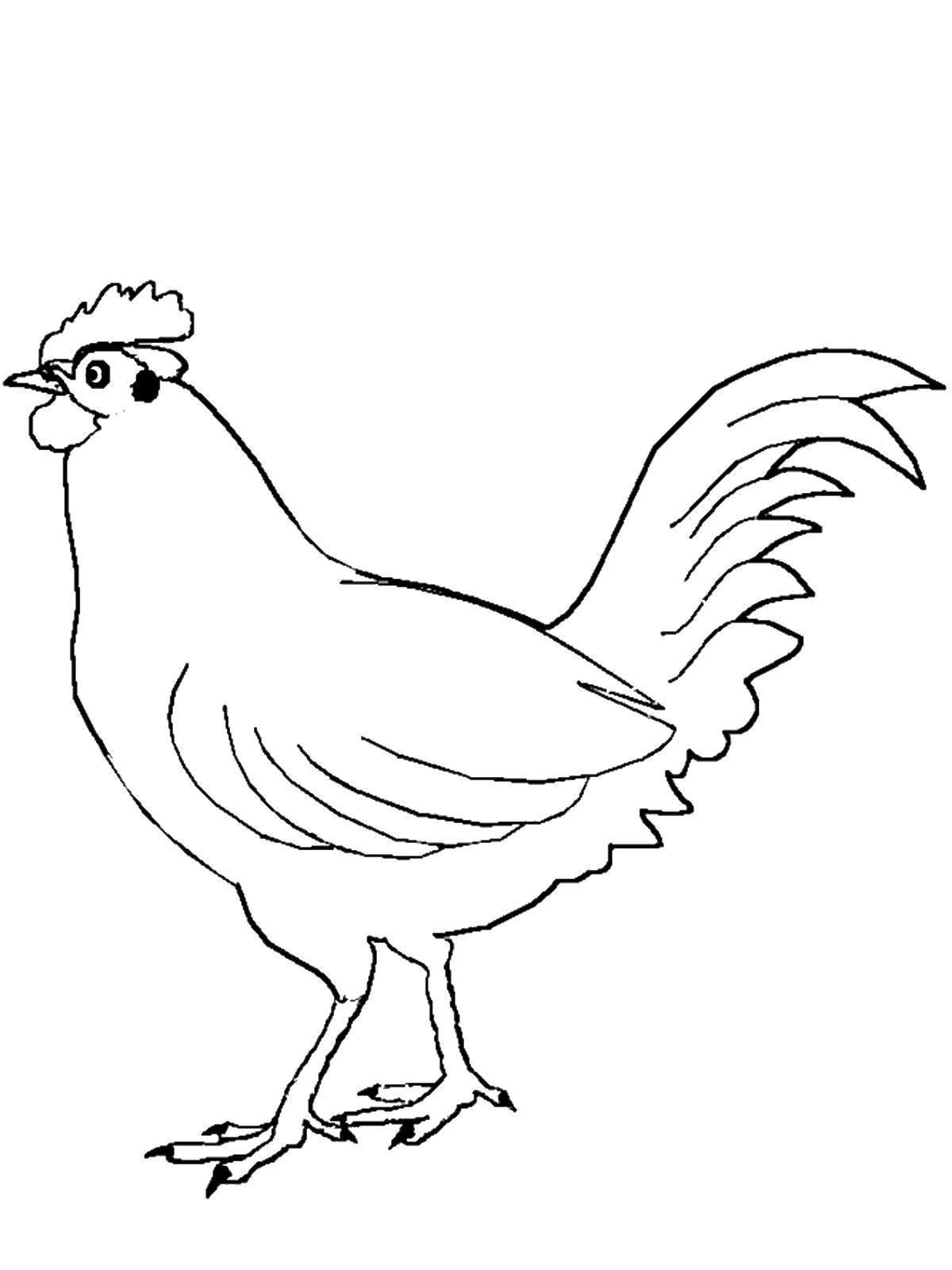 Распечатать картинки курица