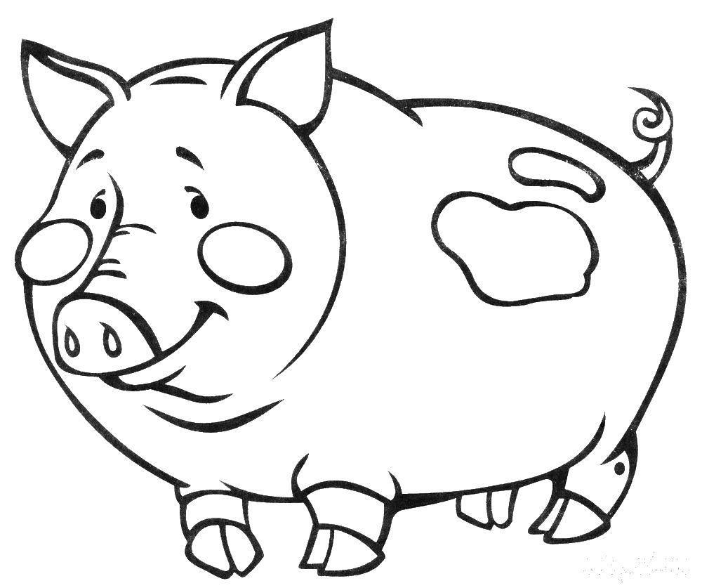 Свинка картинка для раскрашивания