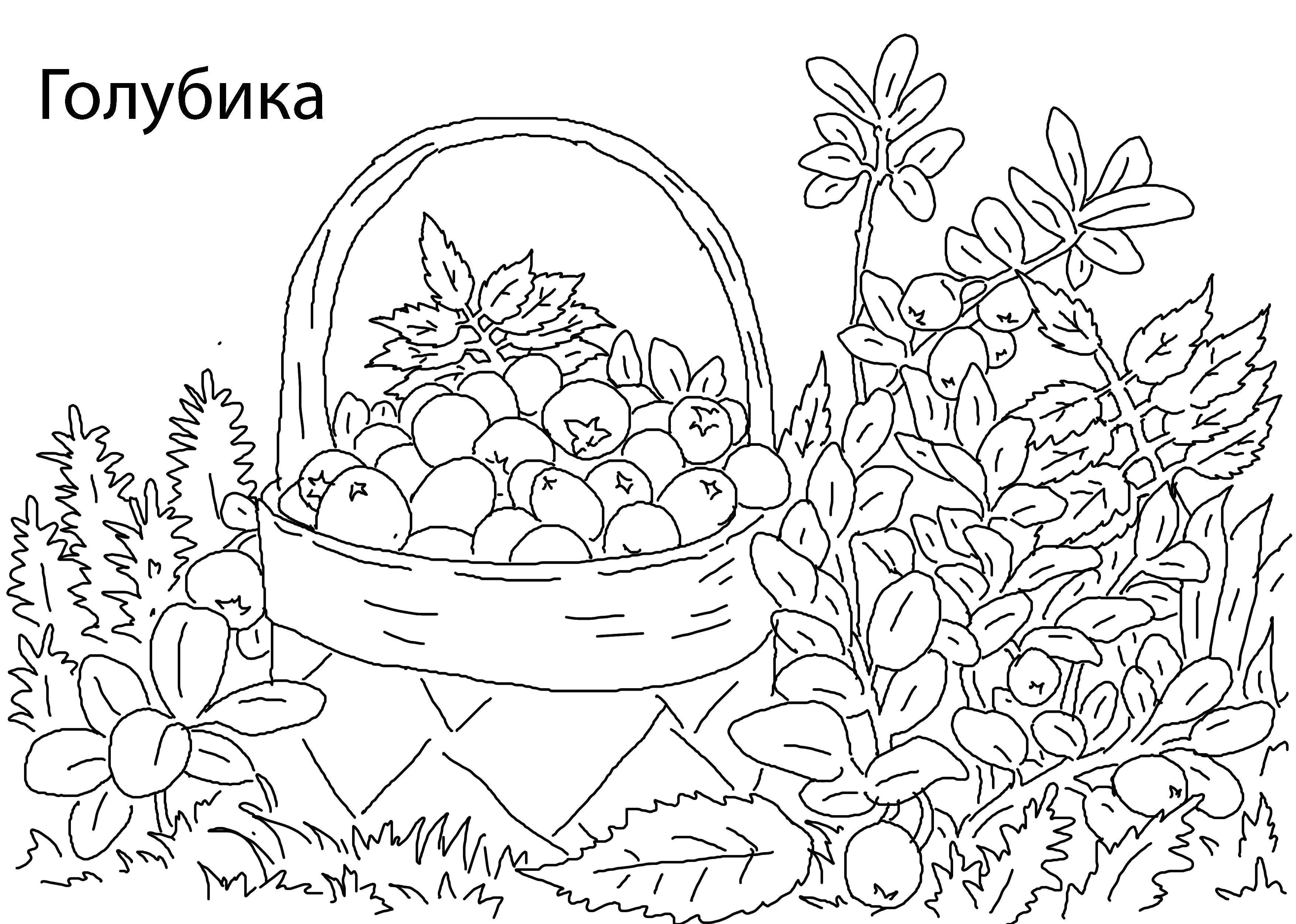 раскраска на тему лес грибы ягоды состав