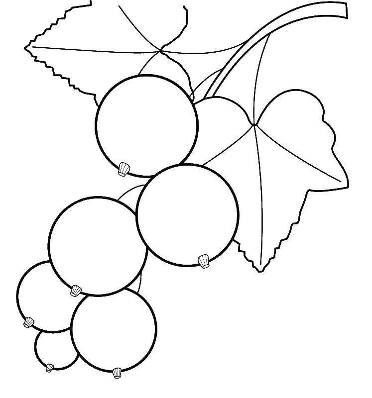 перекрою картинки контуры ягоды откровенной, неприкрытой