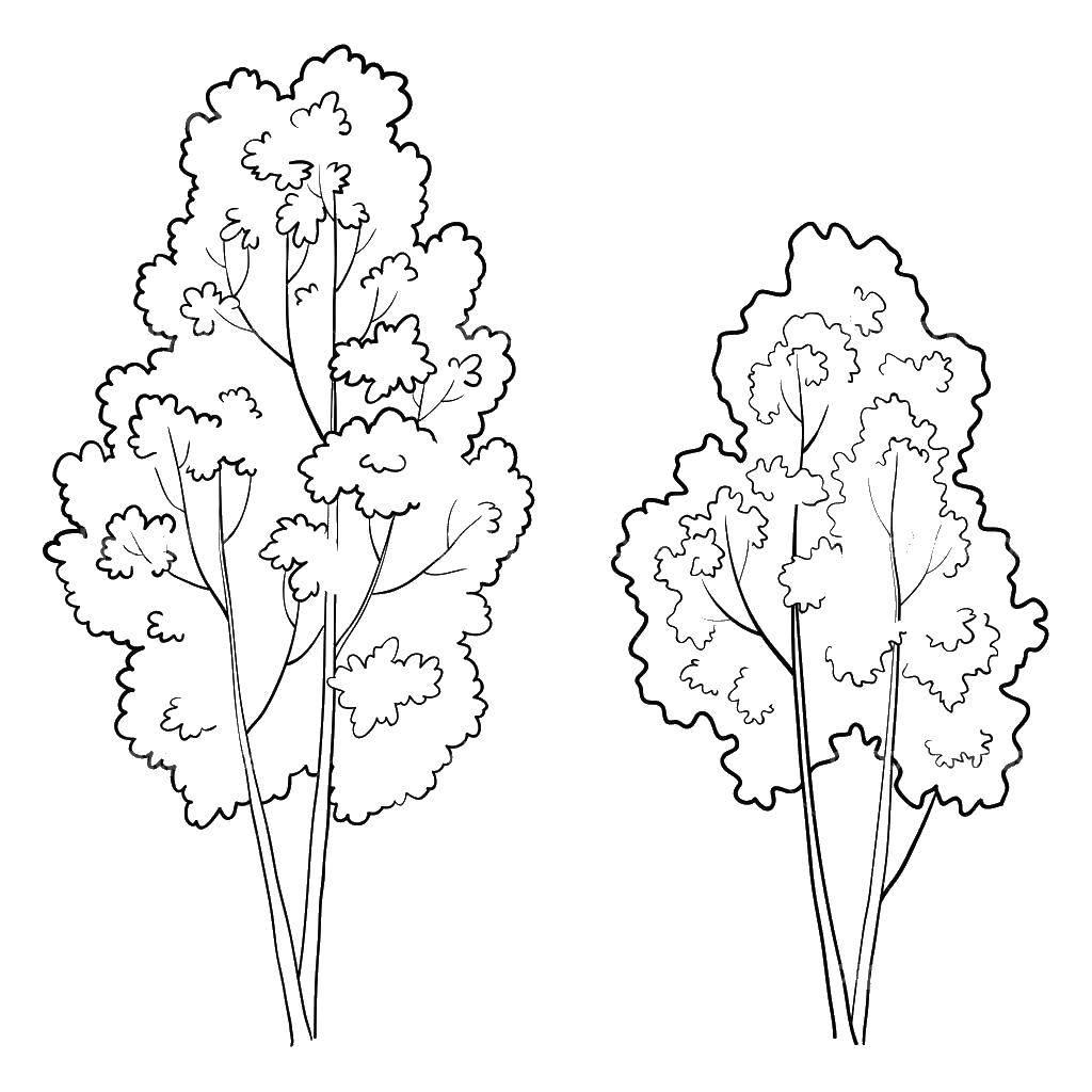 Раскраски дерево, Раскраска Семейное дерево дерево.