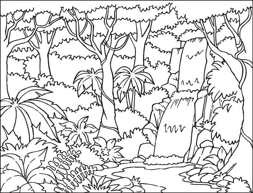 Coloring Nature, waterfall, trees, trees, vines Download nature, forest, waterfall, vegetation.  Print ,Nature,