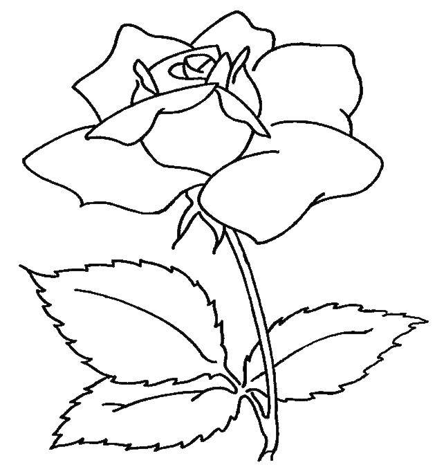 Coloring sheet flowers Download The computer,.  Print