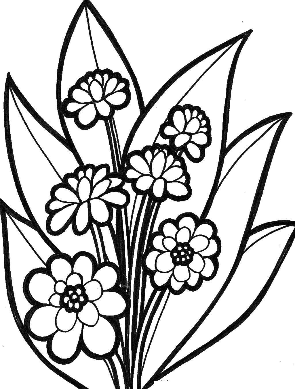 Картинки цветочков раскраска