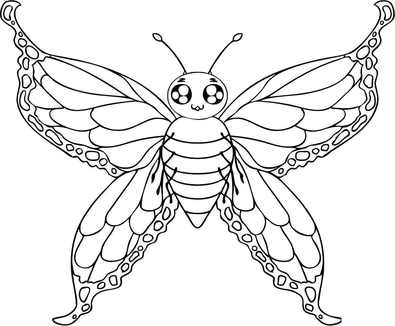 Coloring sheet butterfly Download The alphabet, letters, words.  Print ,ABCs ,