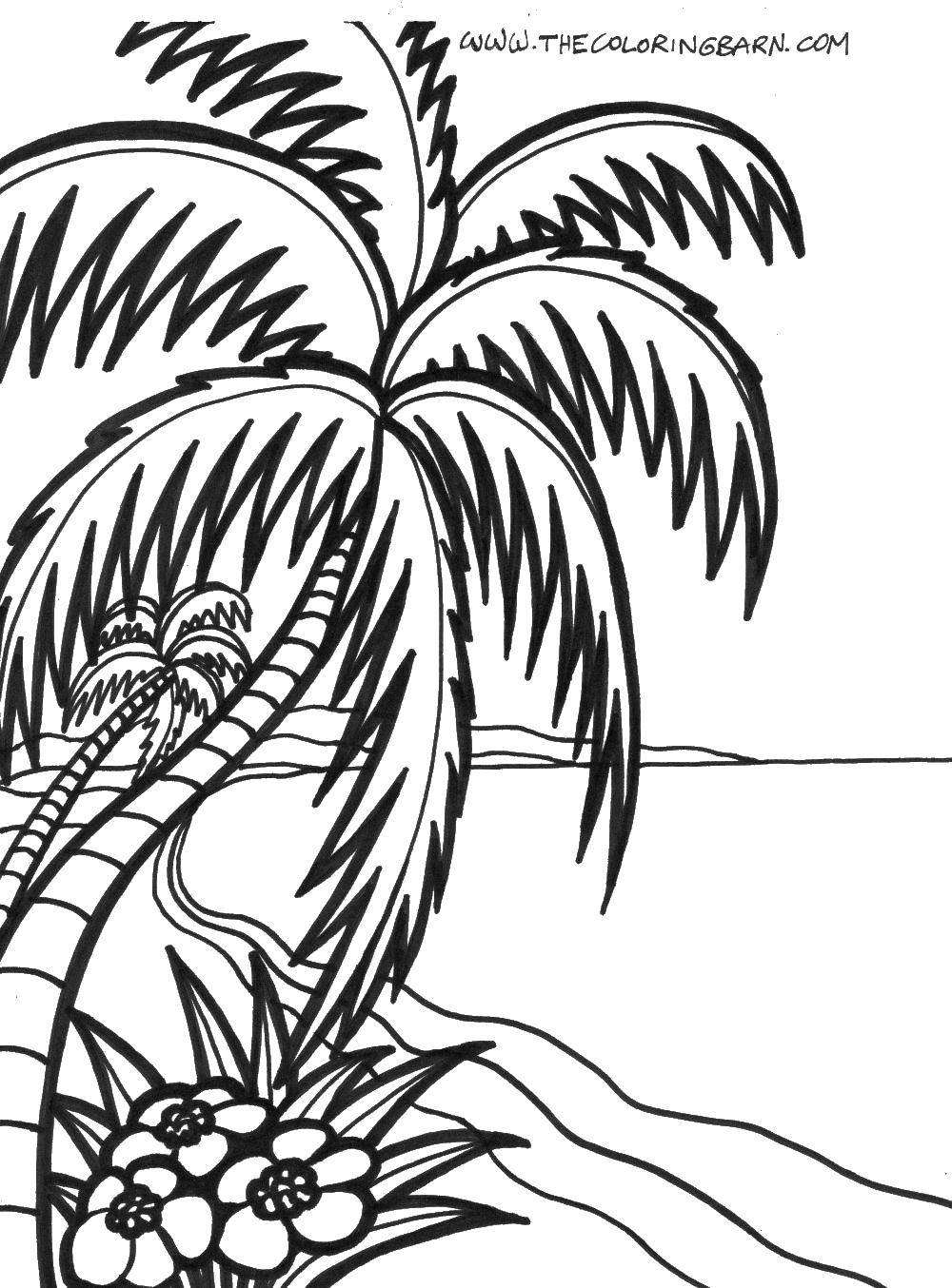 Coloring Palm trees by the ocean Download Trees, palm tree.  Print ,Summer beach,