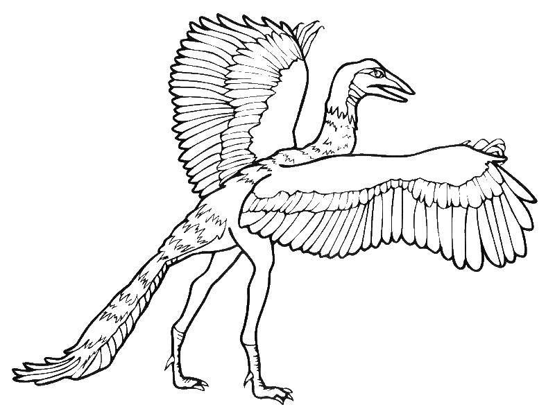 Coloring Archaeopteryx, a descendant of modern birds Download Dinosaurs.  Print ,dinosaur,